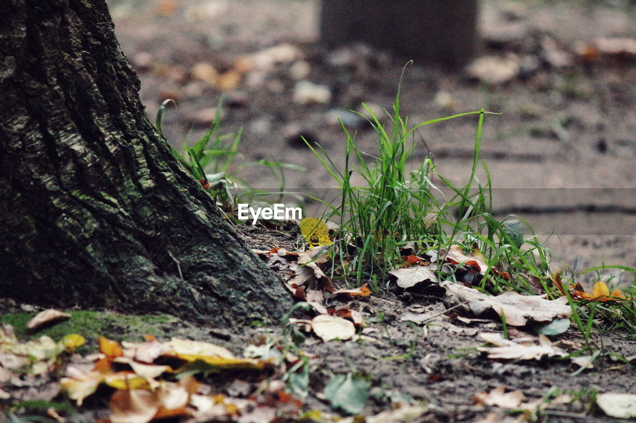selective focus, tree trunk, moss, growth, surface level, nature, plant, outdoors, tranquility, non-urban scene, beauty in nature, green color, growing, scenics, tranquil scene, dirty