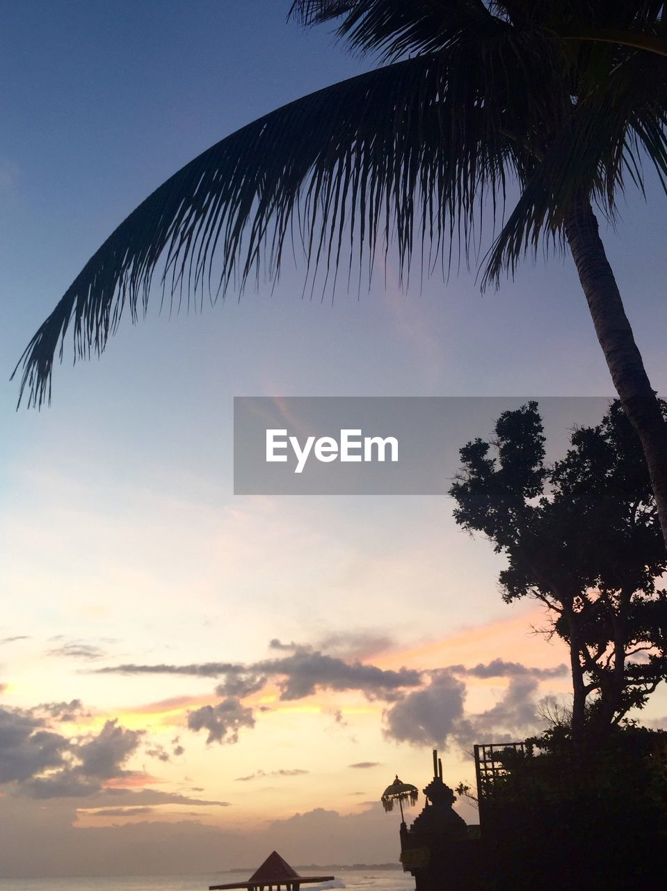 sunset, tree, palm tree, sky, beauty in nature, nature, silhouette, scenics, no people, outdoors, low angle view, tranquility, tranquil scene, cloud - sky, growth, day