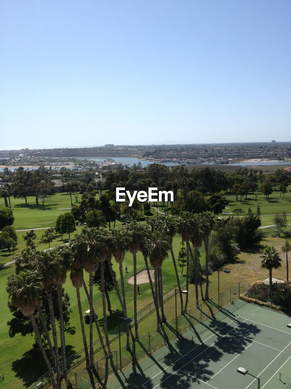 High angle view of palm trees on field against clear sky