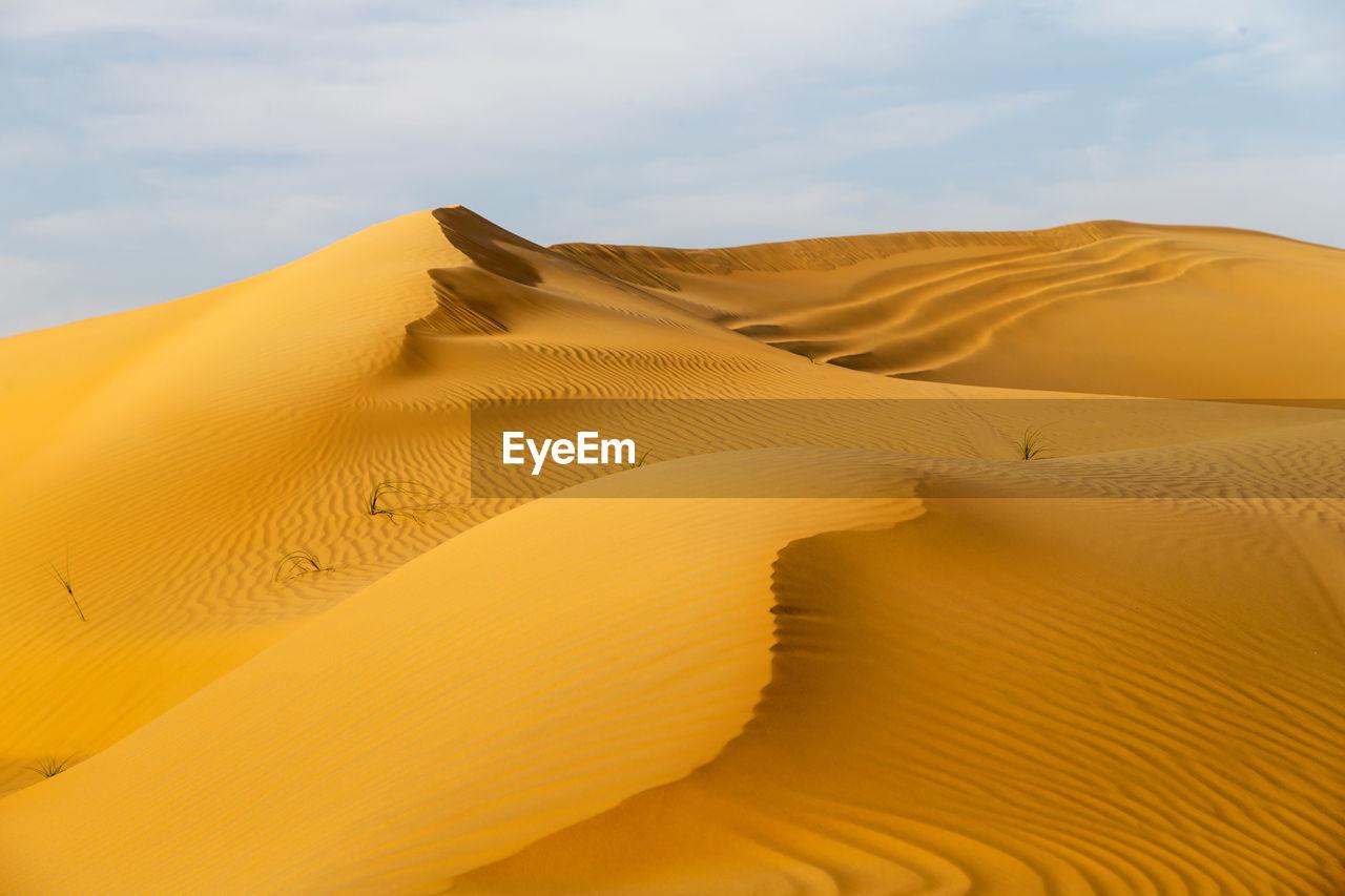 Beautiful sand dunes in the desert in united arab emirates