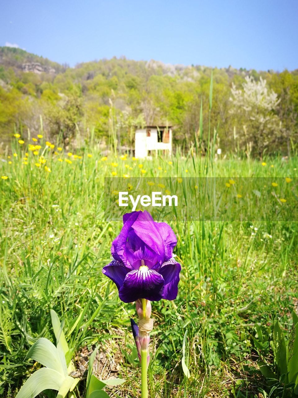 flower, growth, nature, beauty in nature, field, grass, day, green color, outdoors, plant, fragility, no people, purple, freshness, flower head, sunlight, tranquility, blooming, close-up, sky, crocus