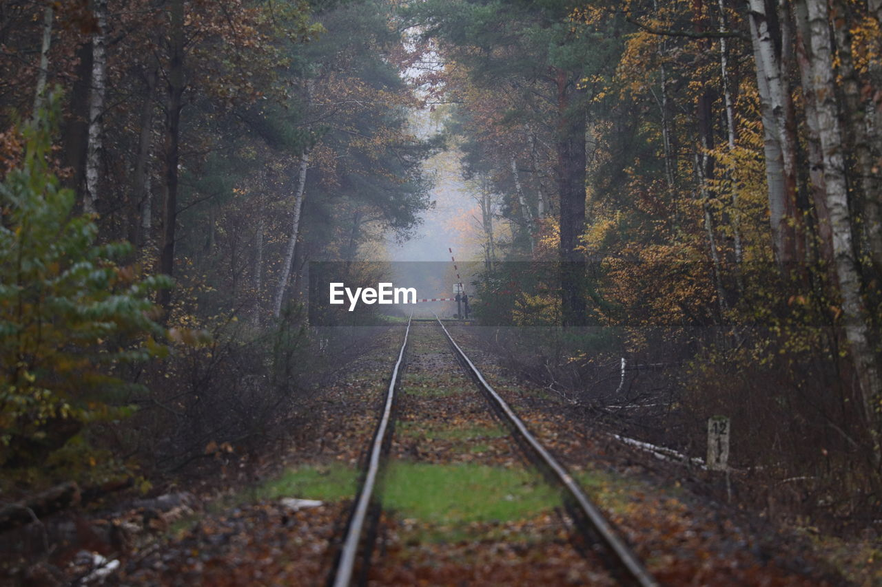 tree, plant, track, rail transportation, railroad track, transportation, nature, land, forest, day, direction, the way forward, no people, outdoors, trunk, mode of transportation, tree trunk, growth, tranquility, fog, diminishing perspective