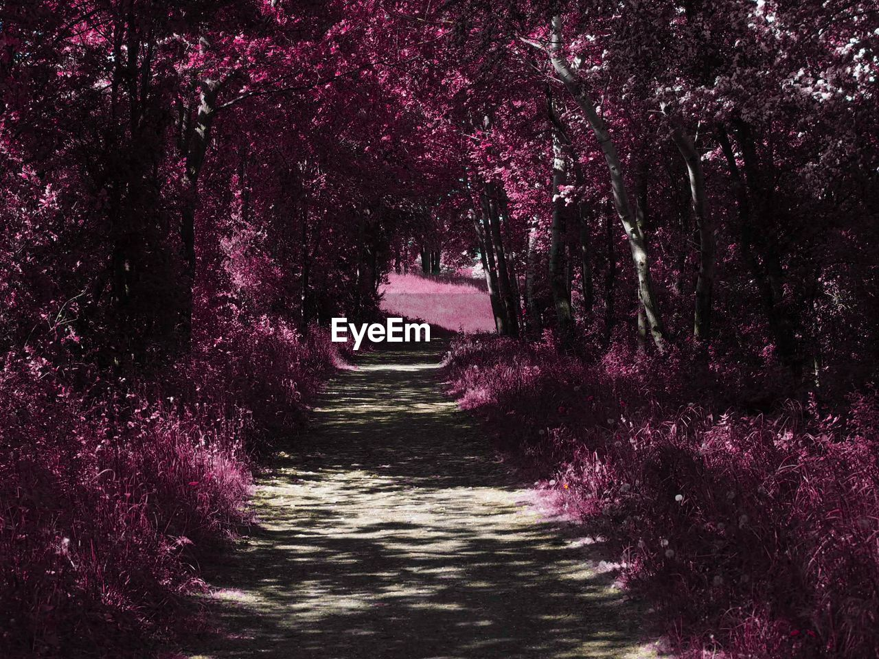 plant, beauty in nature, pink color, flower, no people, tree, growth, nature, tranquility, direction, tranquil scene, the way forward, scenics - nature, flowering plant, purple, day, land, forest, outdoors, water, diminishing perspective