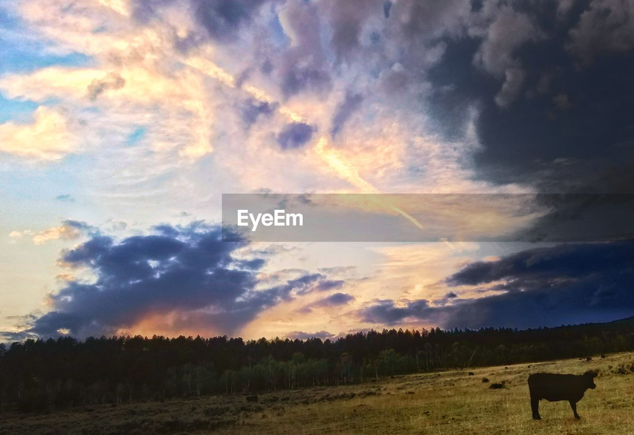 cloud - sky, sky, field, agriculture, landscape, nature, scenics, sunset, no people, beauty in nature, tranquility, rural scene, tranquil scene, tree, outdoors, domestic animals, animal themes, day, mammal