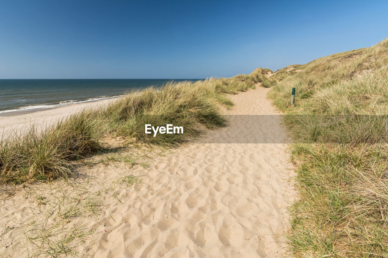 land, sky, grass, sea, beach, sand, beauty in nature, scenics - nature, horizon, plant, water, tranquility, clear sky, tranquil scene, nature, horizon over water, day, blue, no people, marram grass, outdoors