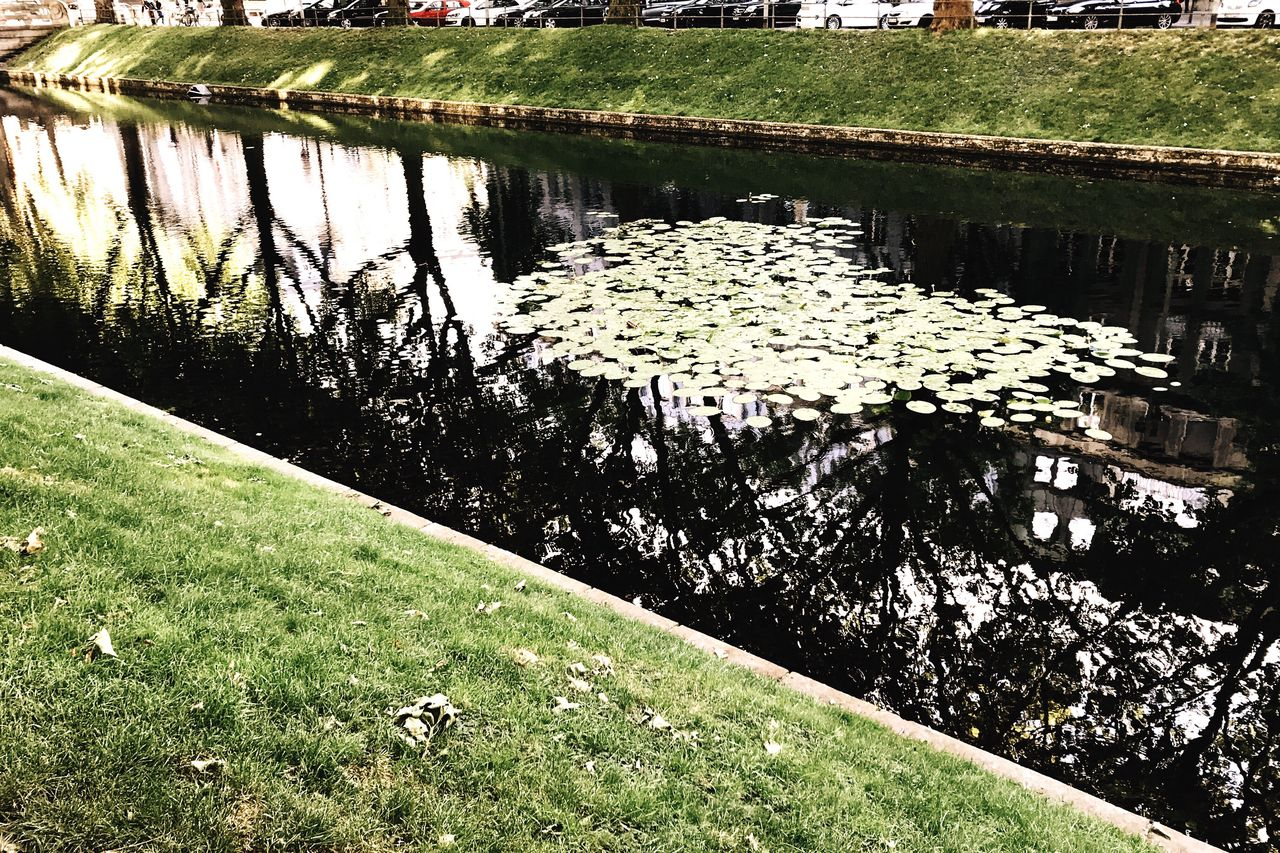 water, reflection, lake, nature, tranquility, grass, no people, outdoors, floating on water, day, lily pad, growth, plant, beauty in nature