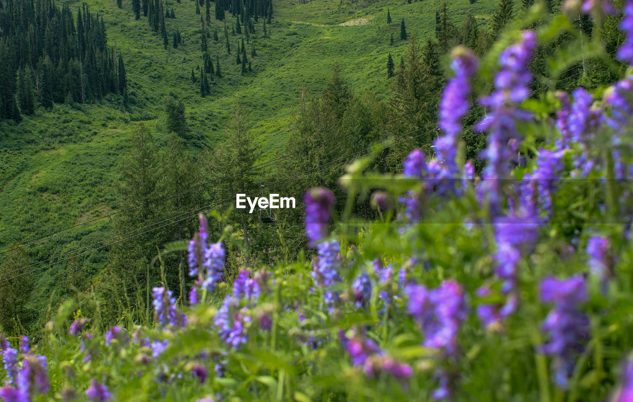 flower, purple, nature, plant, growth, beauty in nature, forest, tree, outdoors, no people, green color, day, scenics, fragility, mountain, close-up, freshness