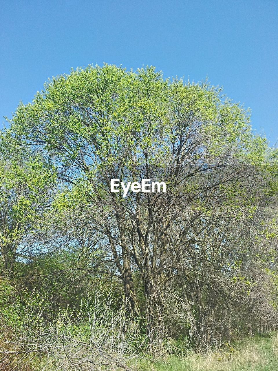 tree, nature, growth, day, clear sky, no people, outdoors, tranquility, plant, beauty in nature, branch, grass