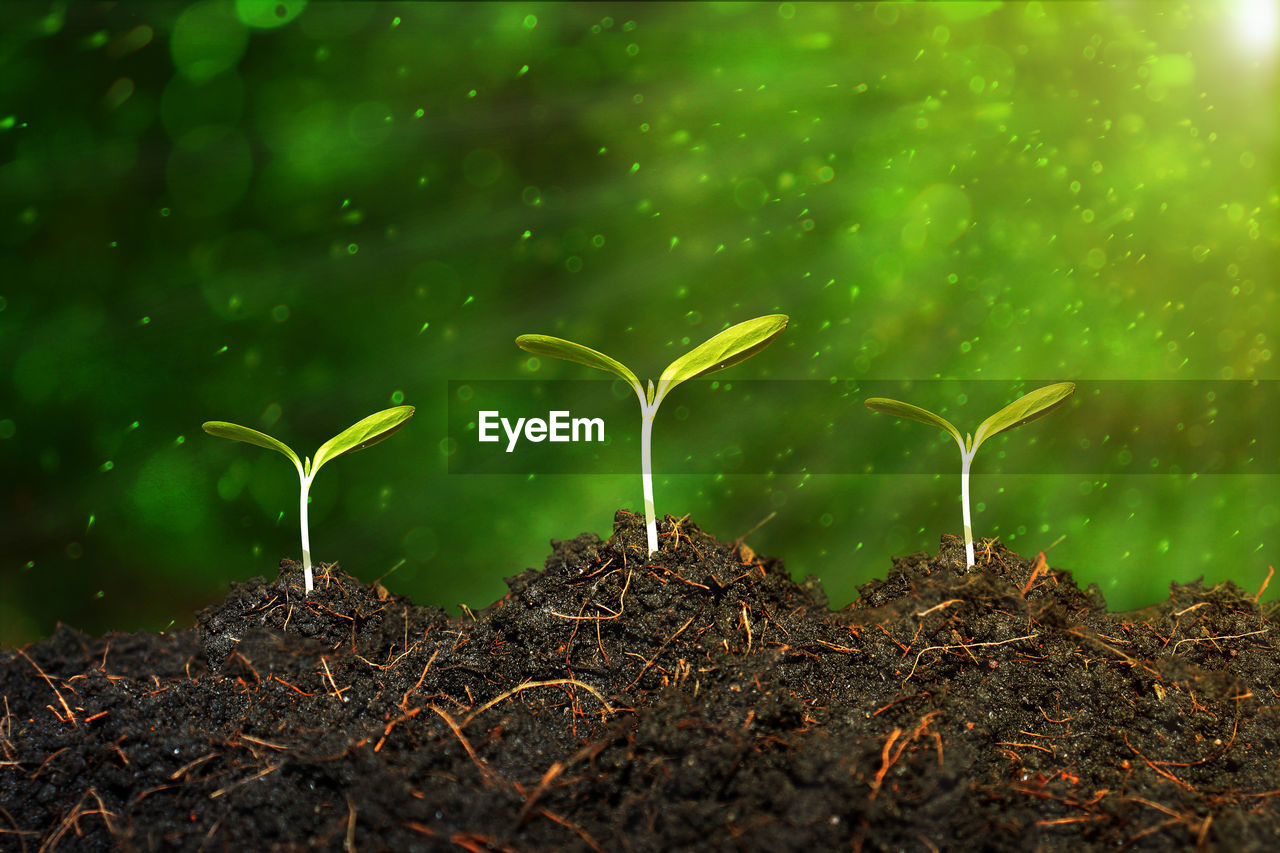 growth, plant, land, beginnings, nature, field, plant part, green color, no people, leaf, dirt, new life, selective focus, beauty in nature, vulnerability, day, fragility, outdoors, close-up, seedling, small, plantation