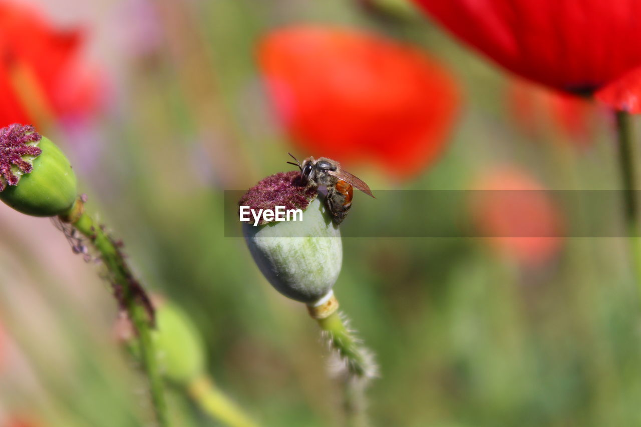 plant, growth, beauty in nature, flowering plant, flower, freshness, close-up, selective focus, no people, day, fragility, nature, vulnerability, insect, animal themes, invertebrate, fruit, focus on foreground, food, food and drink, flower head, outdoors, pollination