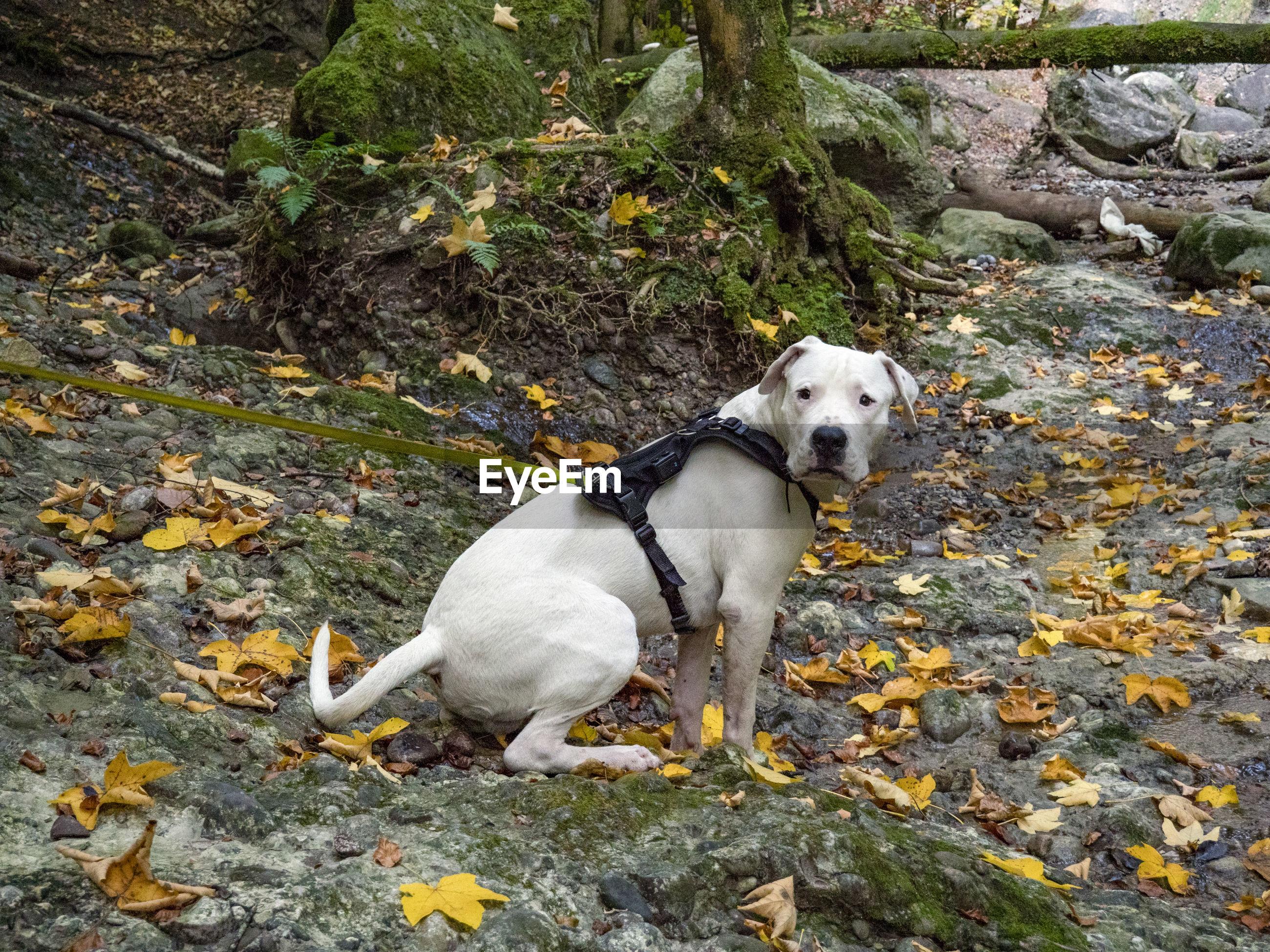 HIGH ANGLE VIEW OF DOG ON ROCKS