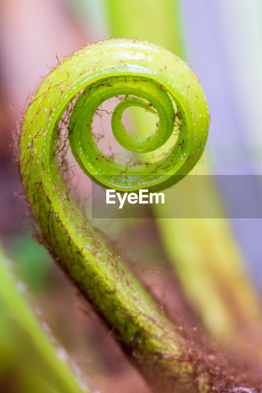 green color, close-up, selective focus, tendril, no people, beauty in nature, spiral, freshness, growth, plant, nature, water, vulnerability, focus on foreground, drop, fragility, curled up, day, wet, purity, dew