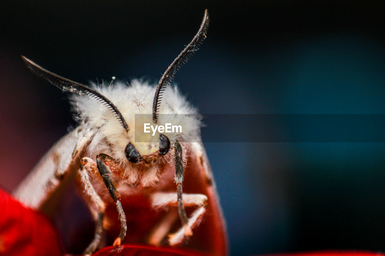 Close-Up Of Moth
