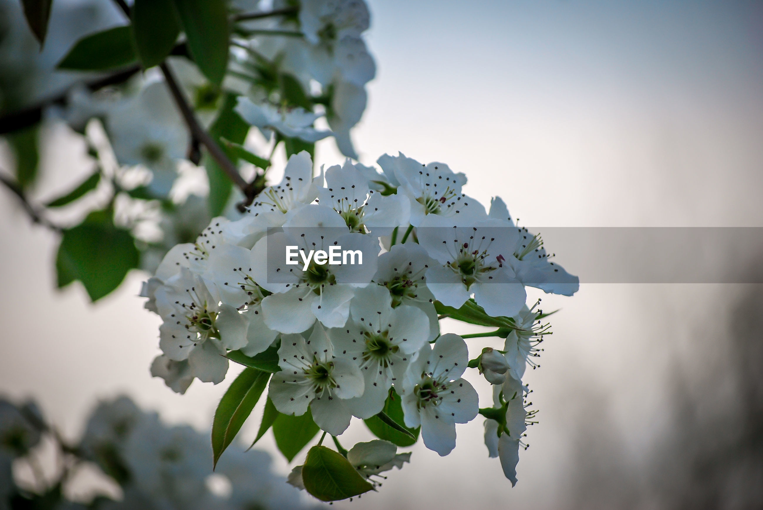 CLOSE-UP OF WHITE FLOWERING PLANT AGAINST TREE