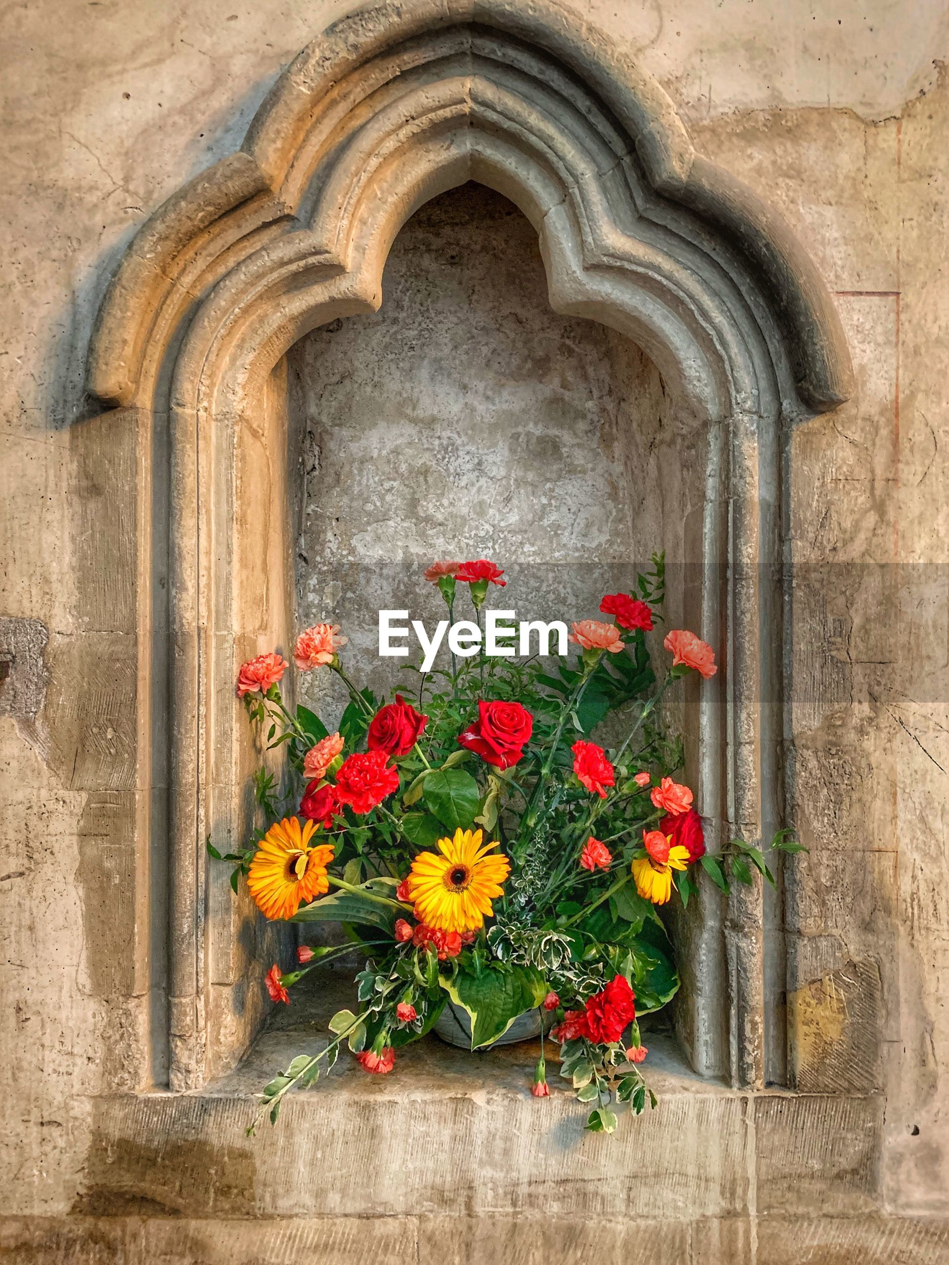 flower, flowering plant, plant, architecture, arch, freshness, fragility, vulnerability, nature, built structure, no people, growth, day, beauty in nature, history, the past, flower head, close-up, petal, outdoors, stone wall
