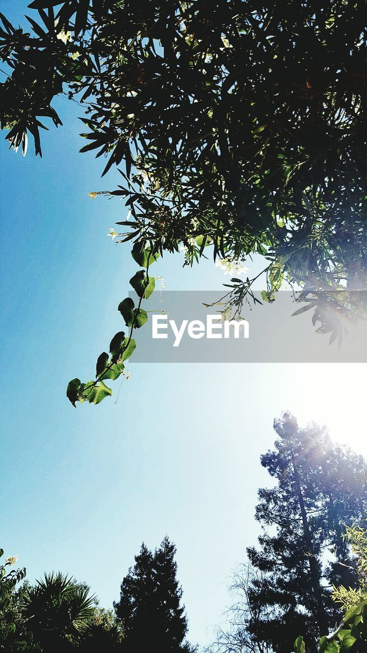 tree, growth, low angle view, branch, leaf, nature, day, no people, beauty in nature, outdoors, green color, clear sky, freshness, sky