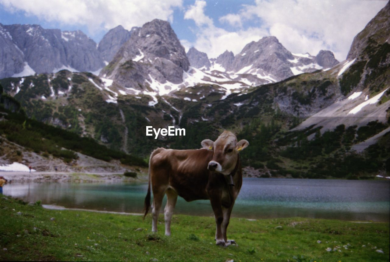 HORSE STANDING ON FIELD WITH MOUNTAIN RANGE