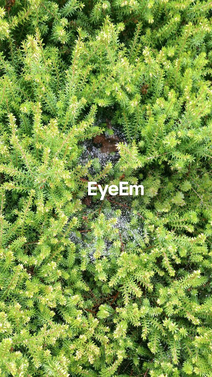 green color, growth, nature, high angle view, plant, full frame, no people, day, backgrounds, outdoors, grass, beauty in nature, close-up