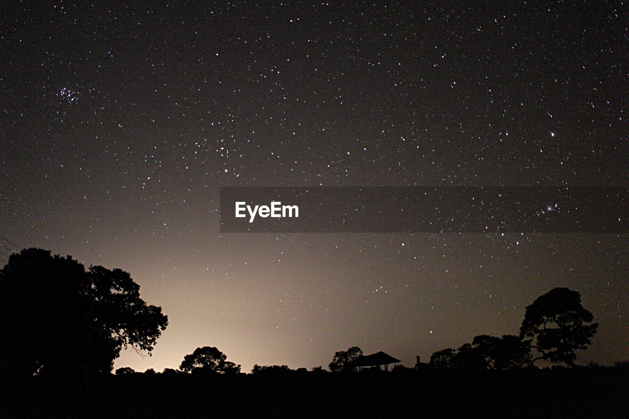 LOW ANGLE VIEW OF SILHOUETTE TREES AGAINST STAR FIELD AGAINST SKY