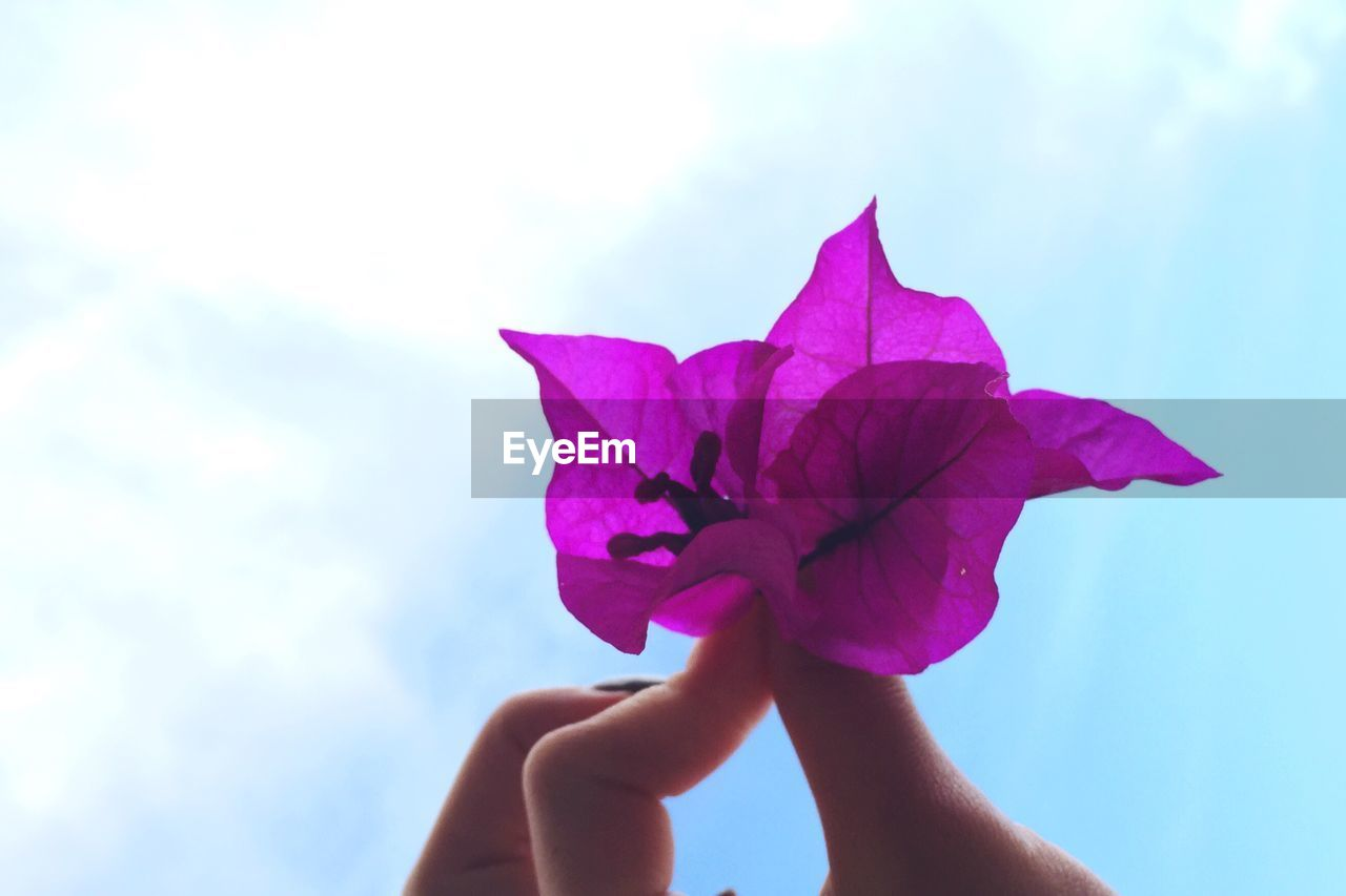human hand, hand, flowering plant, beauty in nature, flower, plant, human body part, fragility, vulnerability, holding, nature, petal, close-up, one person, sky, real people, freshness, day, cloud - sky, pink color, body part, finger, flower head, outdoors, human limb, purple