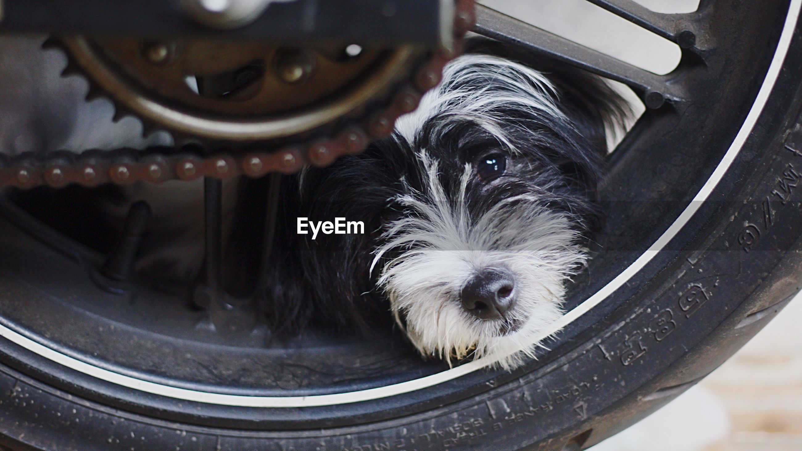 Close-up portrait of dog on tire