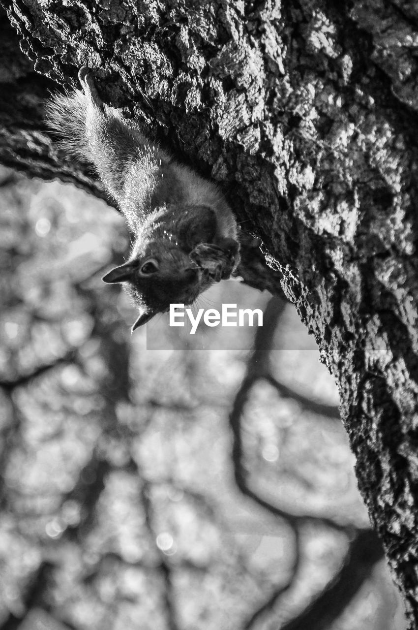 animal themes, one animal, animal, vertebrate, animal wildlife, animals in the wild, bird, tree, no people, close-up, tree trunk, trunk, nature, day, plant, branch, focus on foreground, outdoors, mammal, selective focus, animal head