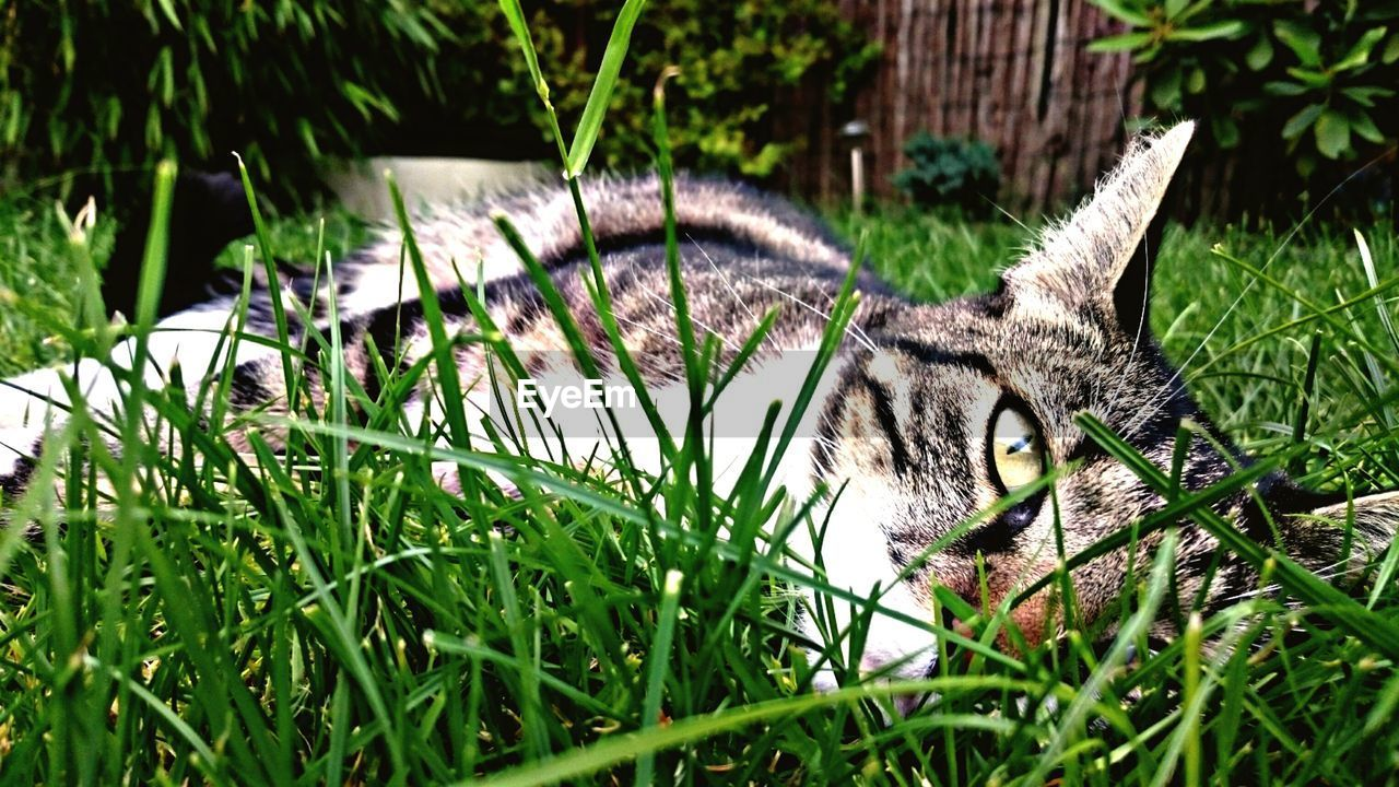 plant, animal themes, one animal, animal, mammal, grass, feline, cat, no people, nature, vertebrate, growth, green color, domestic animals, land, field, relaxation, pets, day, animal wildlife, whisker