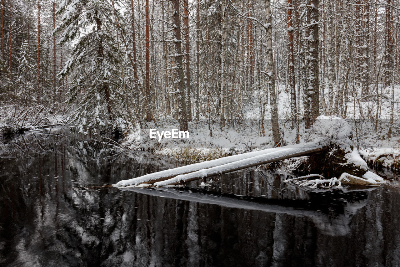 winter, tree, outdoors, day, forest, cold temperature, no people, snow, nature, close-up, water