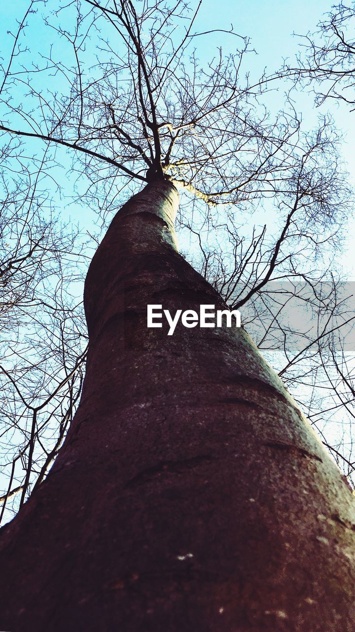 tree, tree trunk, branch, bare tree, low angle view, nature, day, growth, outdoors, tranquility, no people, beauty in nature, sky
