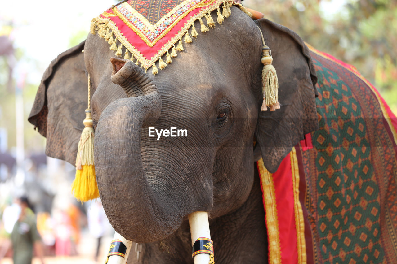 CLOSE-UP OF ELEPHANT IN A TRADITIONAL CLOTHING