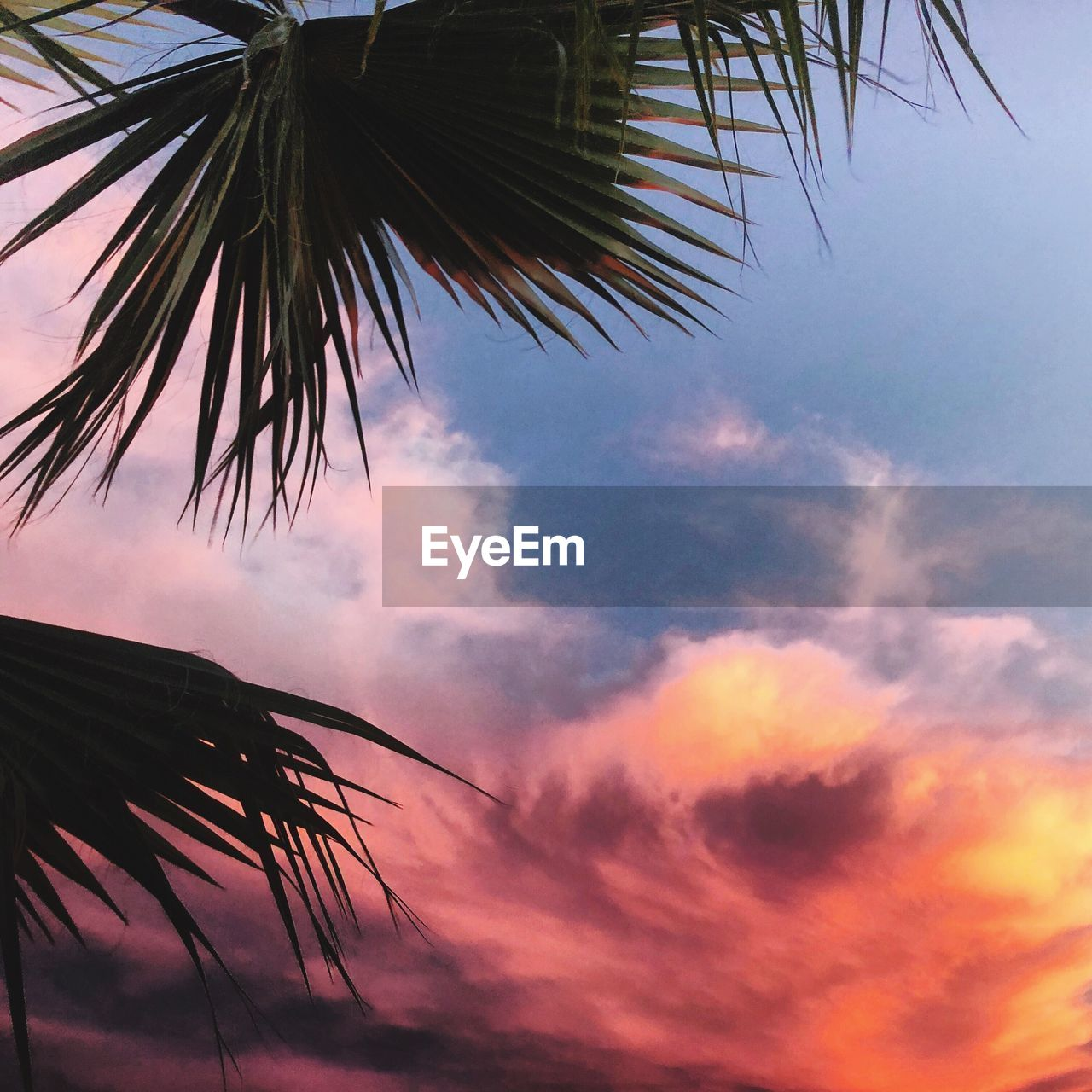 sky, cloud - sky, palm tree, beauty in nature, plant, growth, low angle view, no people, tropical climate, nature, sunset, palm leaf, tree, tranquility, leaf, tranquil scene, scenics - nature, silhouette, outdoors, day, coconut palm tree