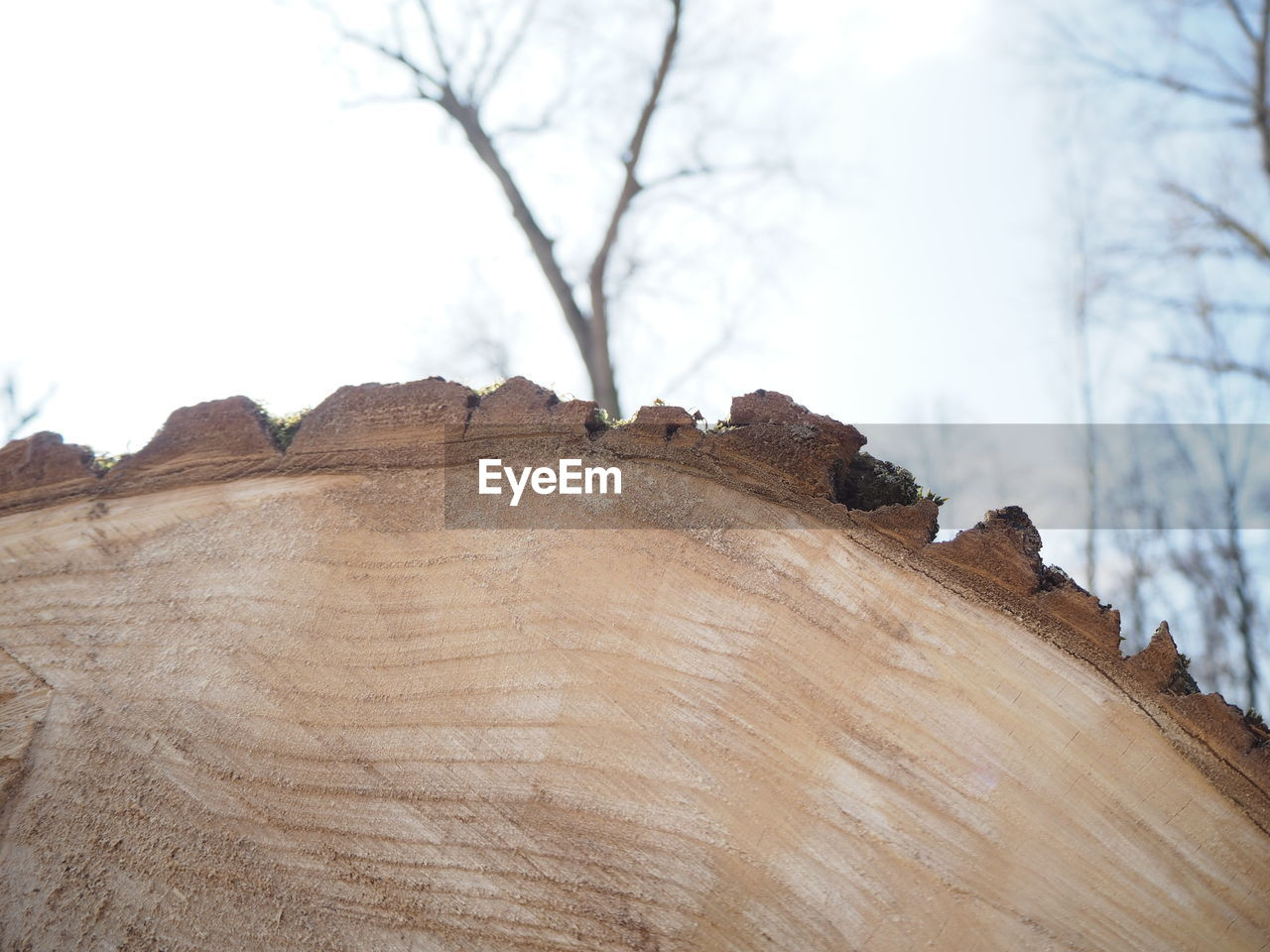 tree, wood - material, sky, nature, day, no people, plant, focus on foreground, close-up, outdoors, branch, bare tree, textured, tree trunk, beauty in nature, trunk, wood, low angle view, tranquility, land, bark