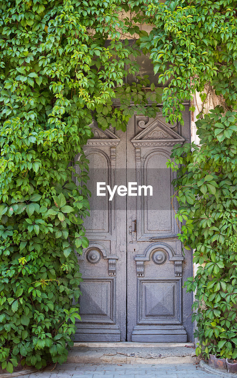 entrance, door, closed, plant, architecture, green color, building exterior, built structure, day, growth, no people, nature, plant part, leaf, ivy, building, outdoors, wood - material, protection, security