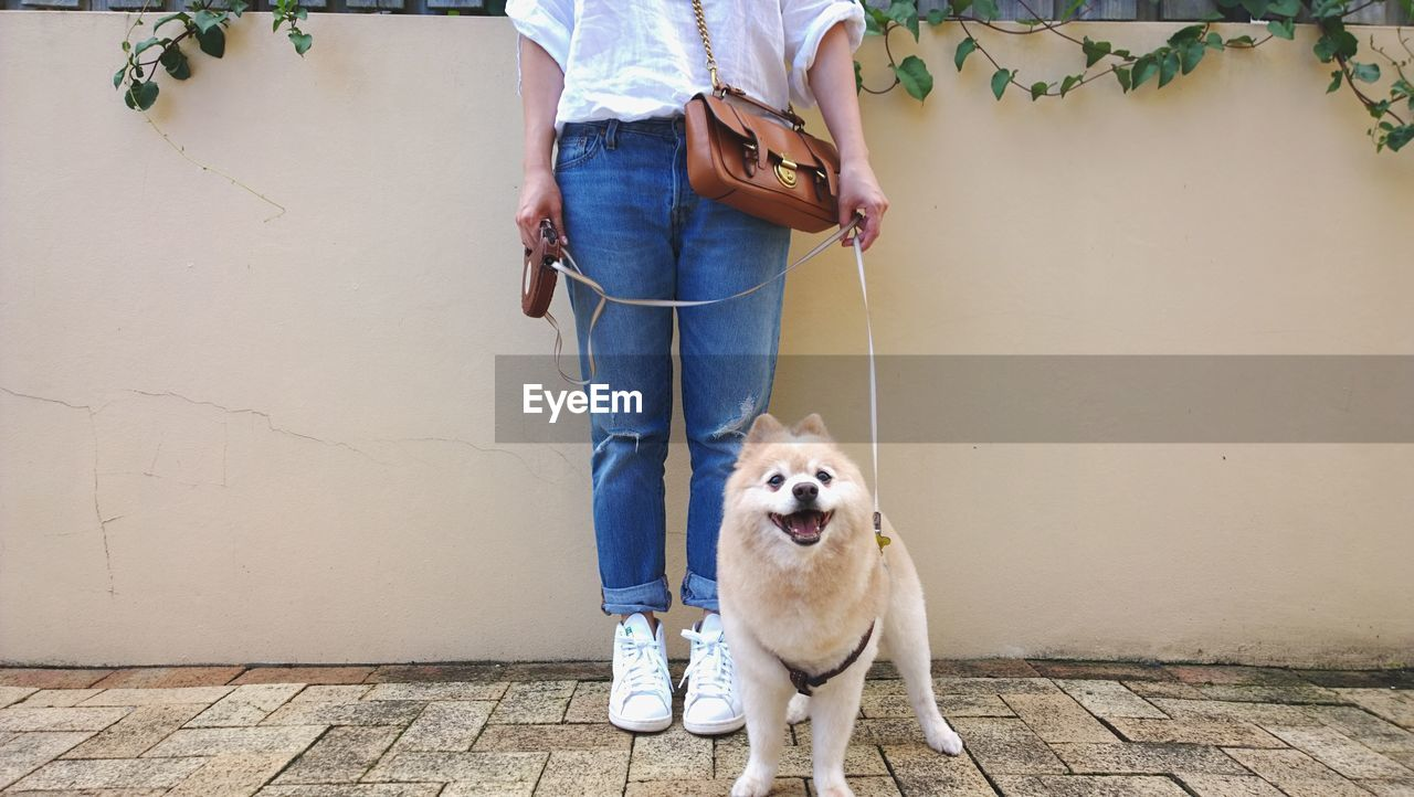 Low Section Of Woman Standing With Pomeranian Against Wall