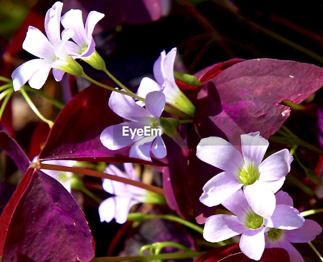flower, petal, fragility, nature, growth, beauty in nature, freshness, no people, flower head, close-up, blooming, outdoors, plant, day
