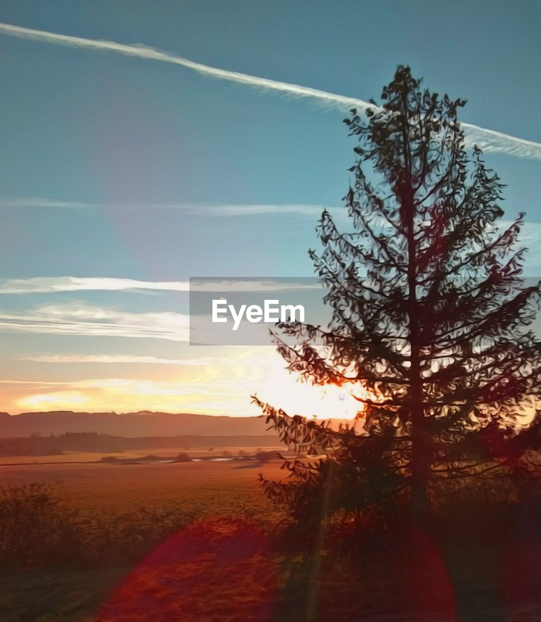 sky, sunset, plant, tree, beauty in nature, tranquil scene, tranquility, scenics - nature, nature, landscape, environment, growth, no people, sunlight, cloud - sky, non-urban scene, silhouette, field, idyllic, land, sun, outdoors, vapor trail