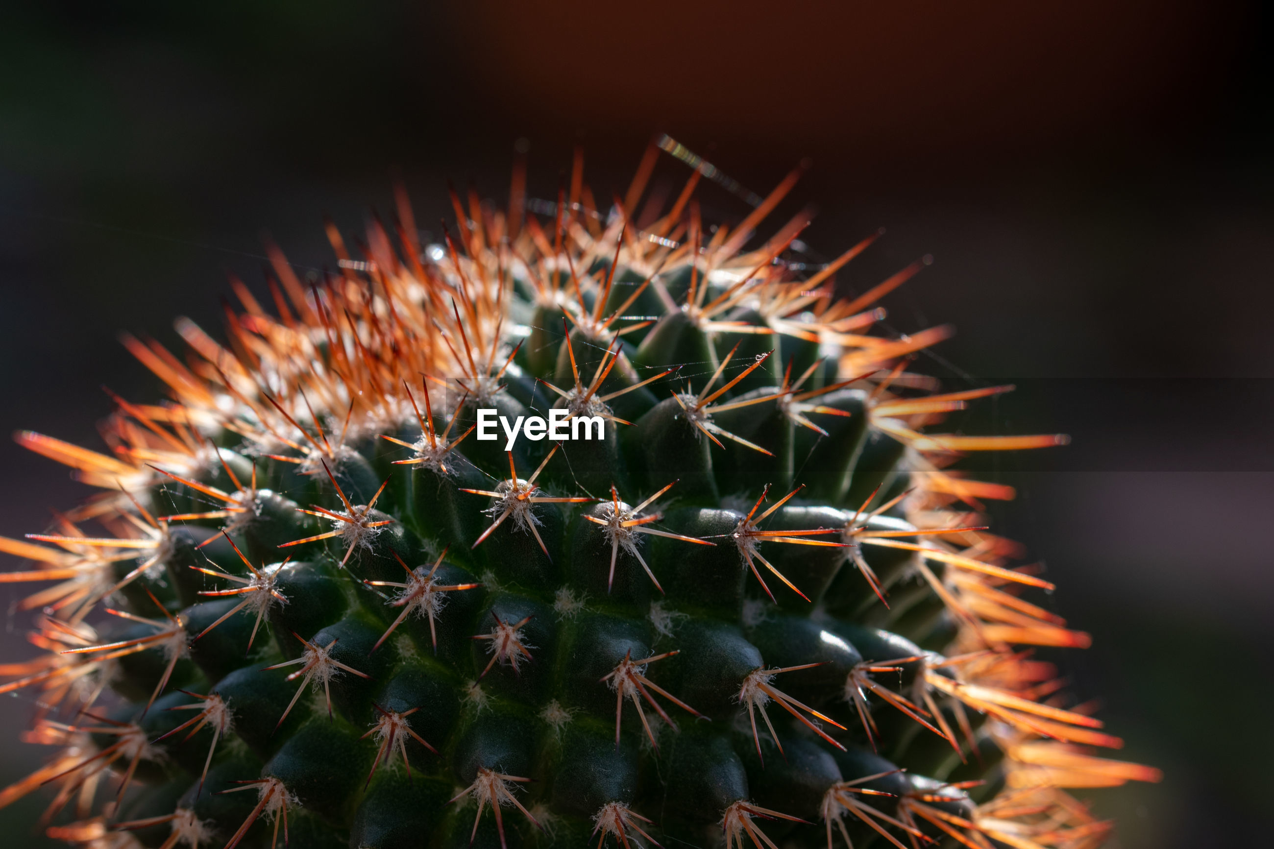 CLOSE-UP OF CACTUS PLANT WITH TEXT