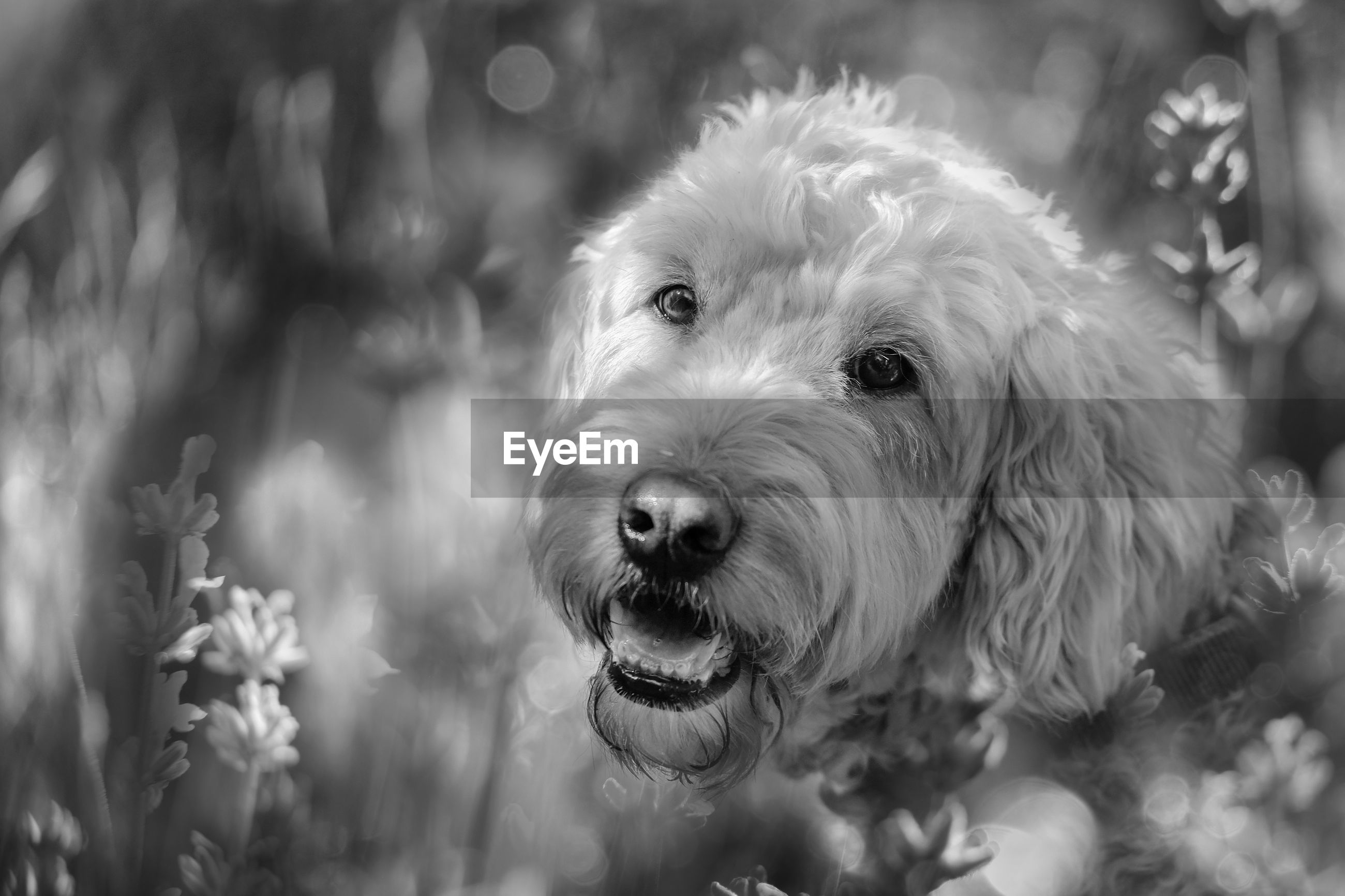 CLOSE-UP PORTRAIT OF A DOG OUTDOORS
