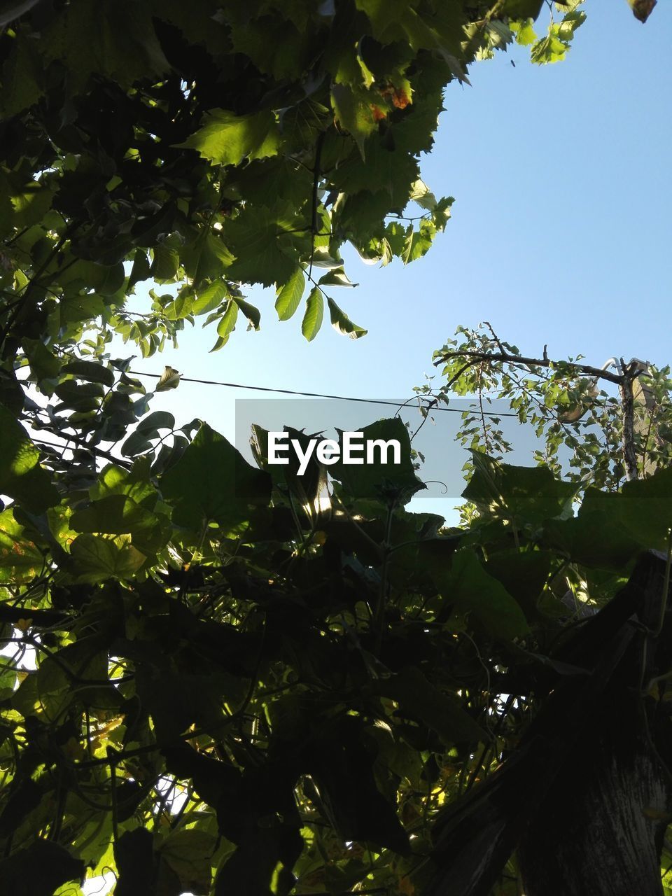 tree, low angle view, growth, nature, leaf, branch, outdoors, no people, day, beauty in nature, sky