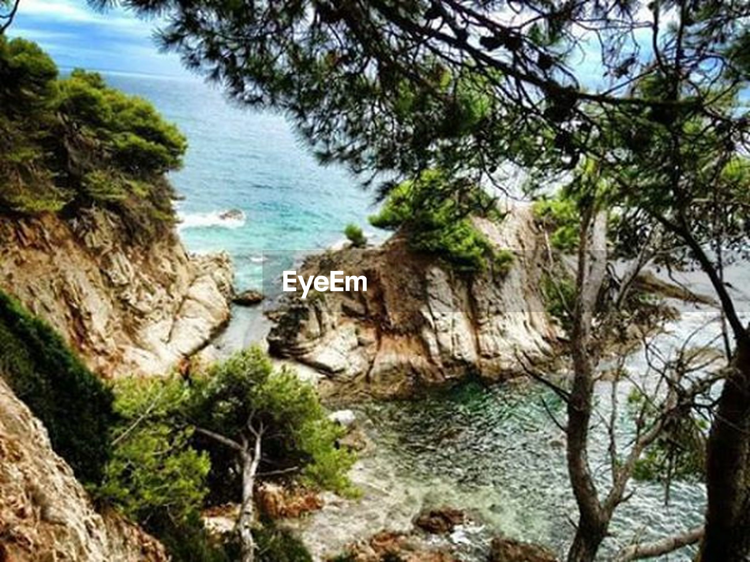 water, tranquility, tranquil scene, sea, tree, beauty in nature, scenics, rock - object, nature, rock formation, sky, rock, cliff, idyllic, day, branch, growth, outdoors, non-urban scene, shore