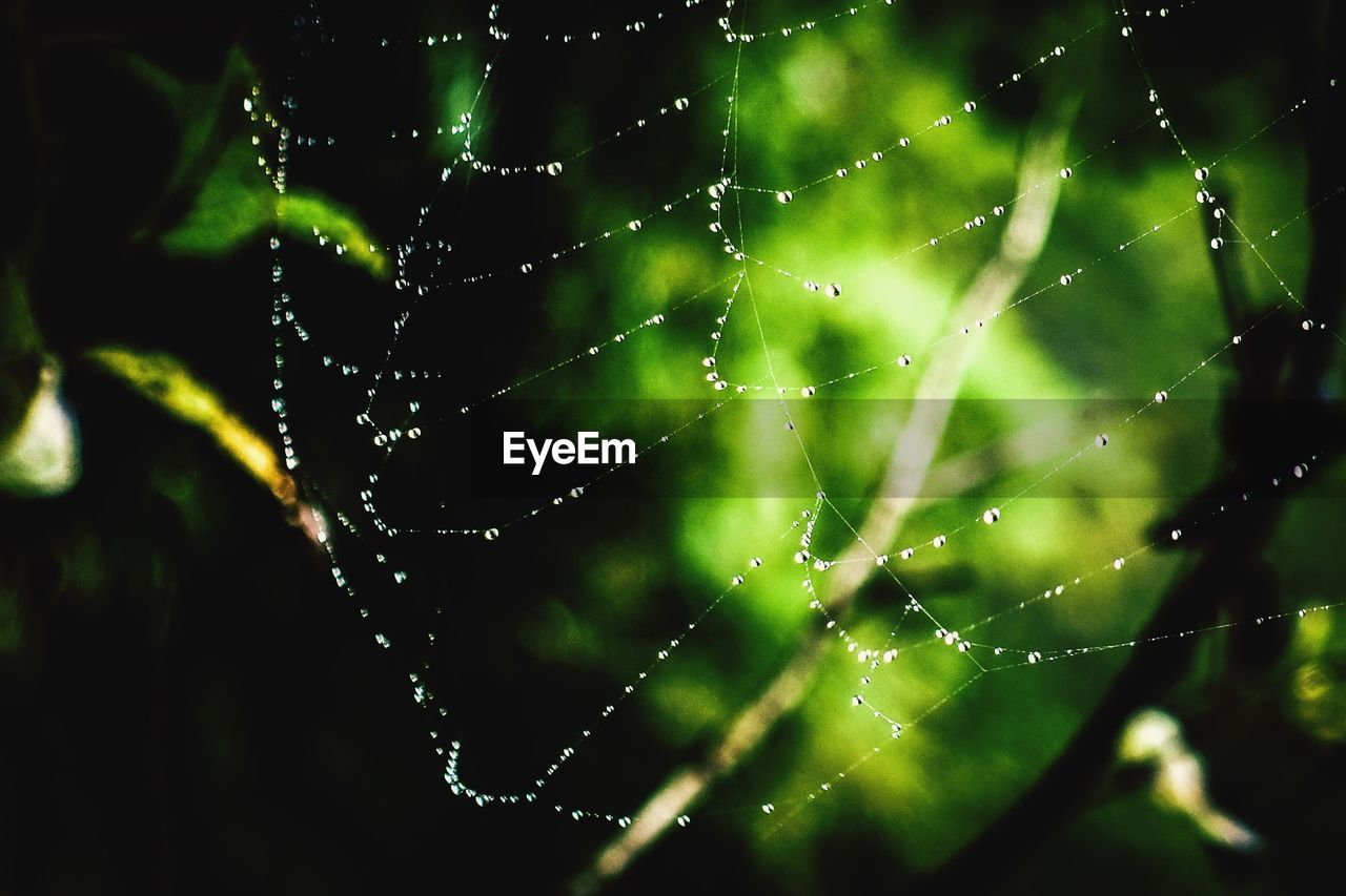 spider web, web, nature, focus on foreground, spider, drop, outdoors, close-up, fragility, one animal, beauty in nature, no people, animal themes, survival, day, green color, trapped, water, complexity, animals in the wild, freshness