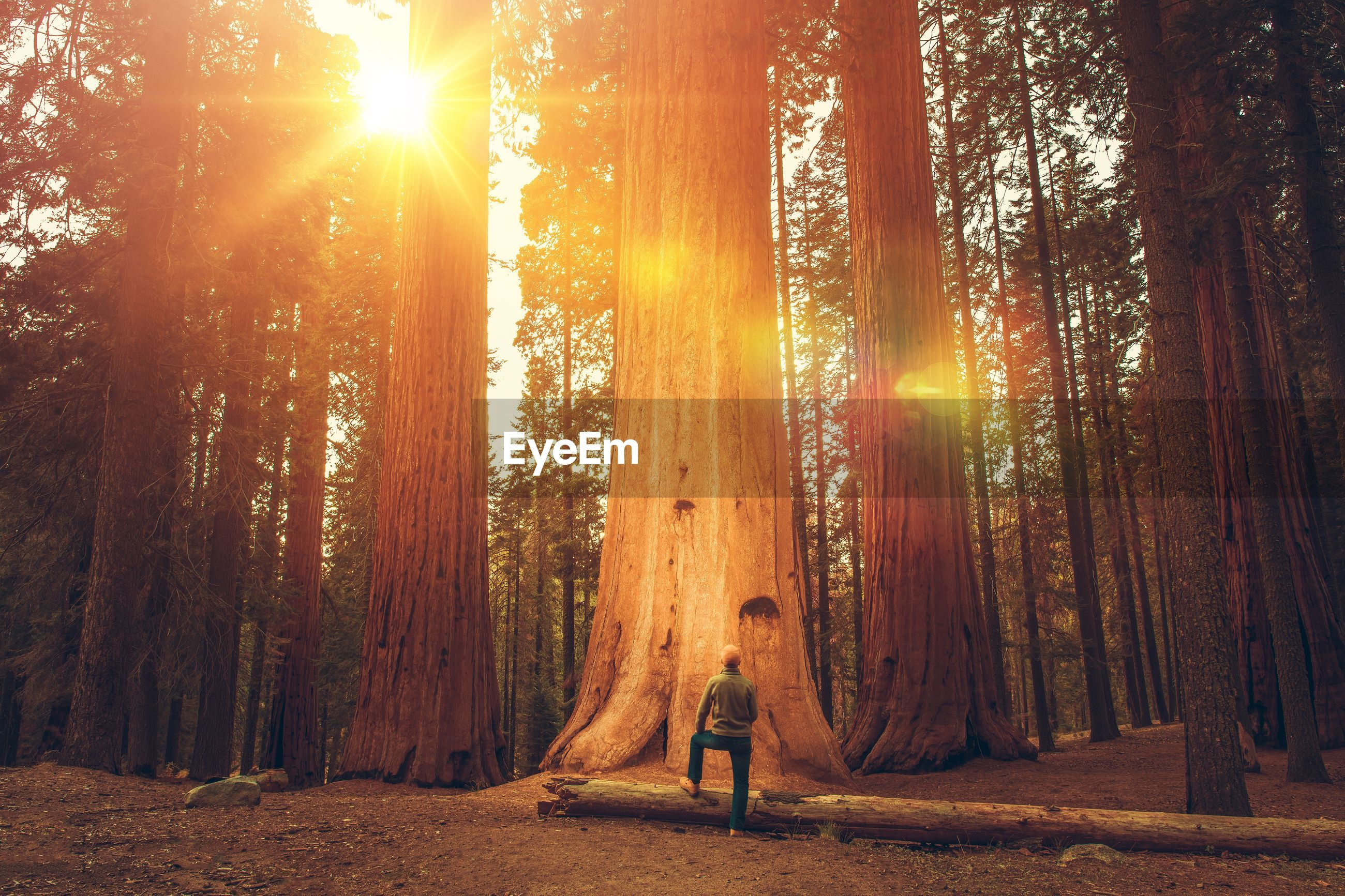 Man standing by tree in forest during sunny day