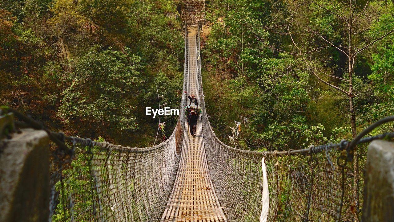 People Walking On Footbridge In Forest