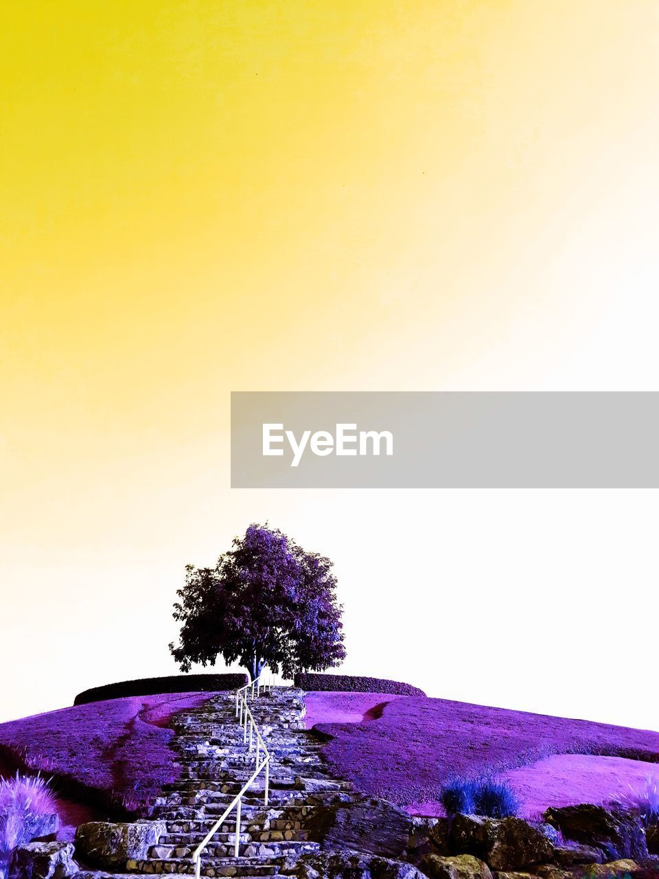 copy space, clear sky, nature, tree, beauty in nature, tranquility, outdoors, tranquil scene, scenics, no people, sky, landscape, day, water, freshness