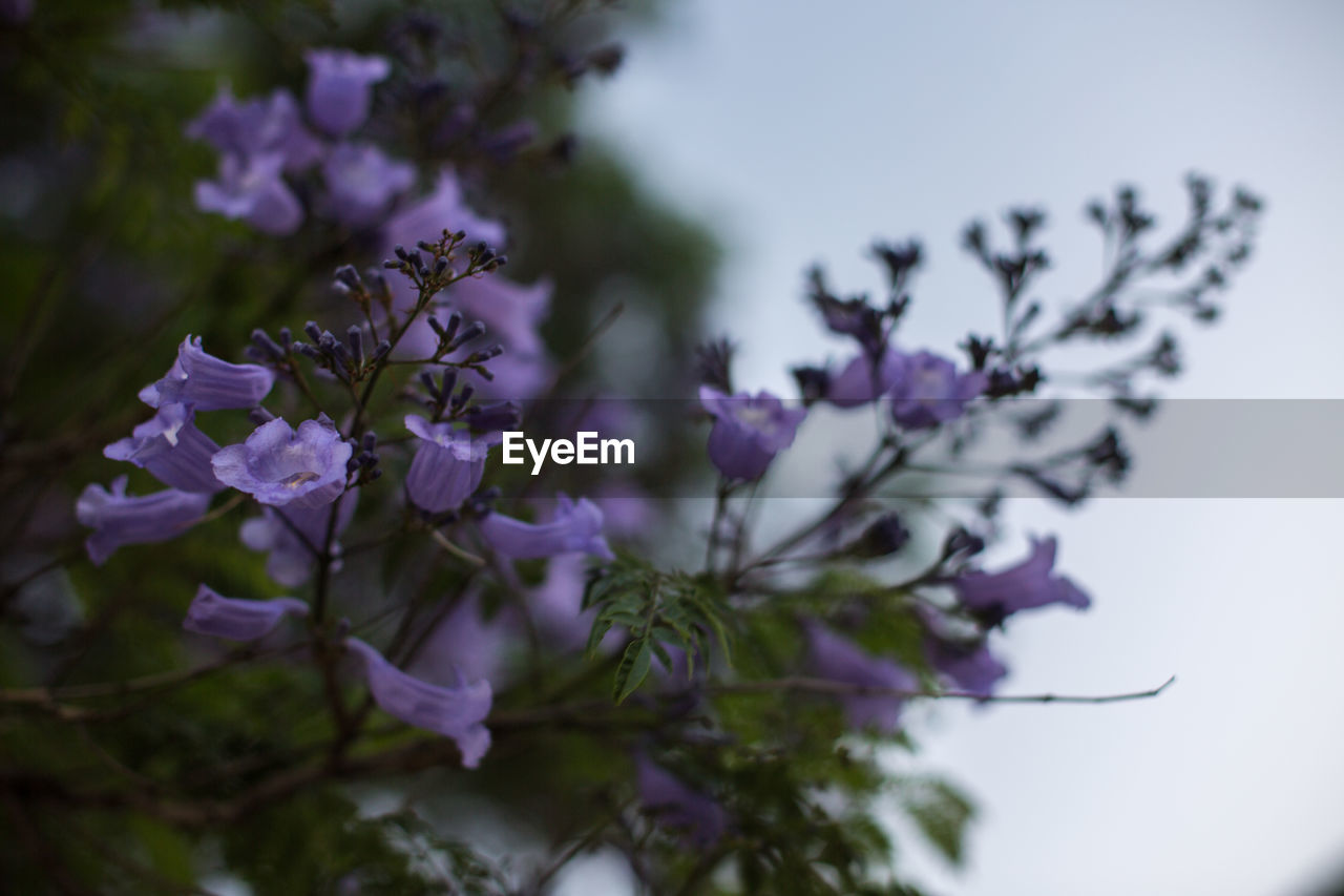 purple, flower, nature, beauty in nature, no people, fragility, day, outdoors, freshness, close-up