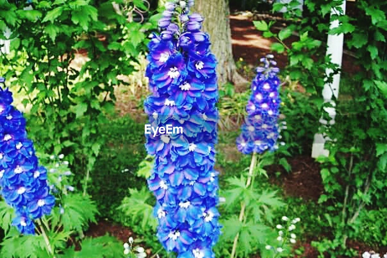 purple, flower, growth, blue, hanging, nature, beauty in nature, plant, outdoors, fragility, no people, day, focus on foreground, close-up, freshness, leaf, flower head