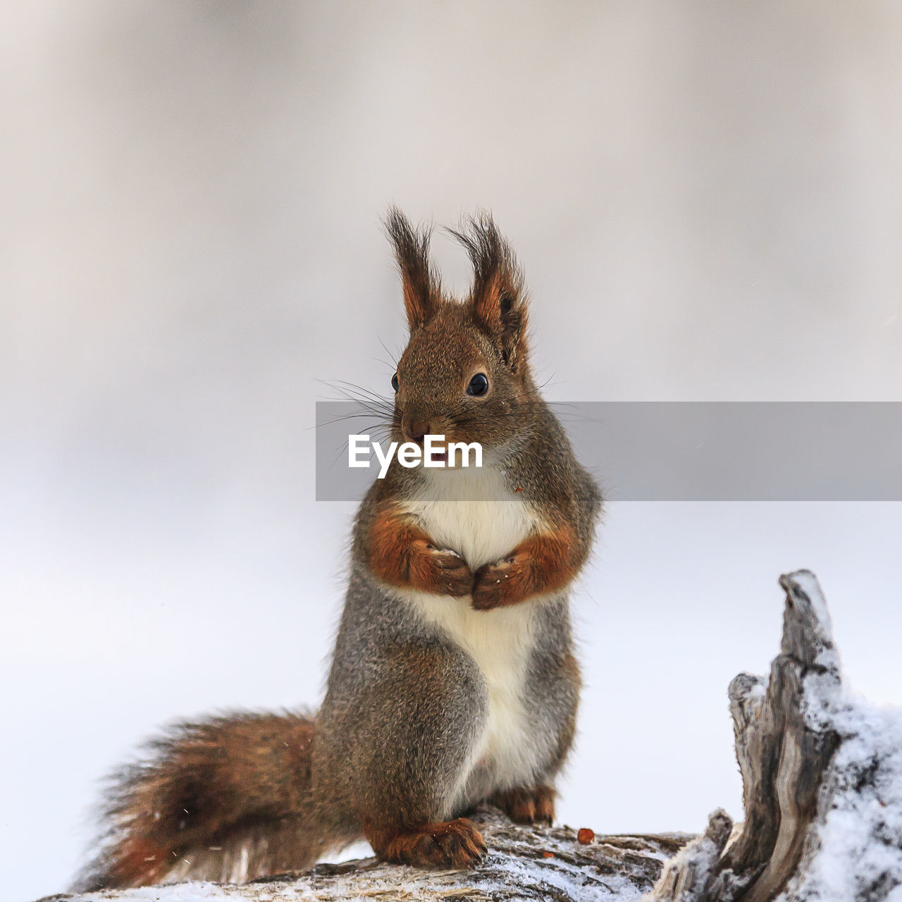animal themes, animal, rodent, animal wildlife, mammal, squirrel, animals in the wild, one animal, vertebrate, no people, focus on foreground, close-up, nature, day, sky, low angle view, outdoors, tree, brown, eating, whisker, herbivorous