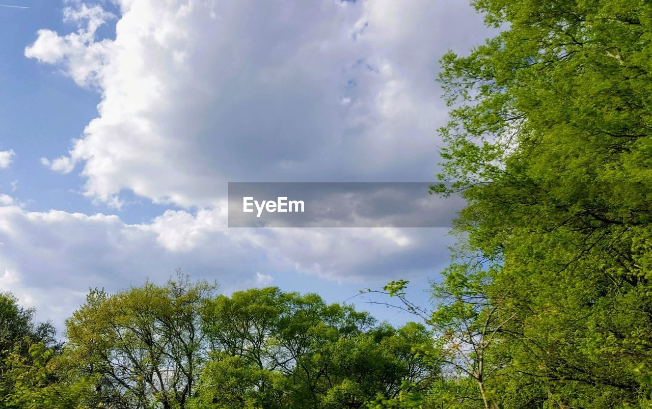 plant, tree, sky, cloud - sky, beauty in nature, growth, low angle view, tranquility, green color, day, no people, nature, tranquil scene, outdoors, scenics - nature, idyllic, land, non-urban scene, sunlight, branch