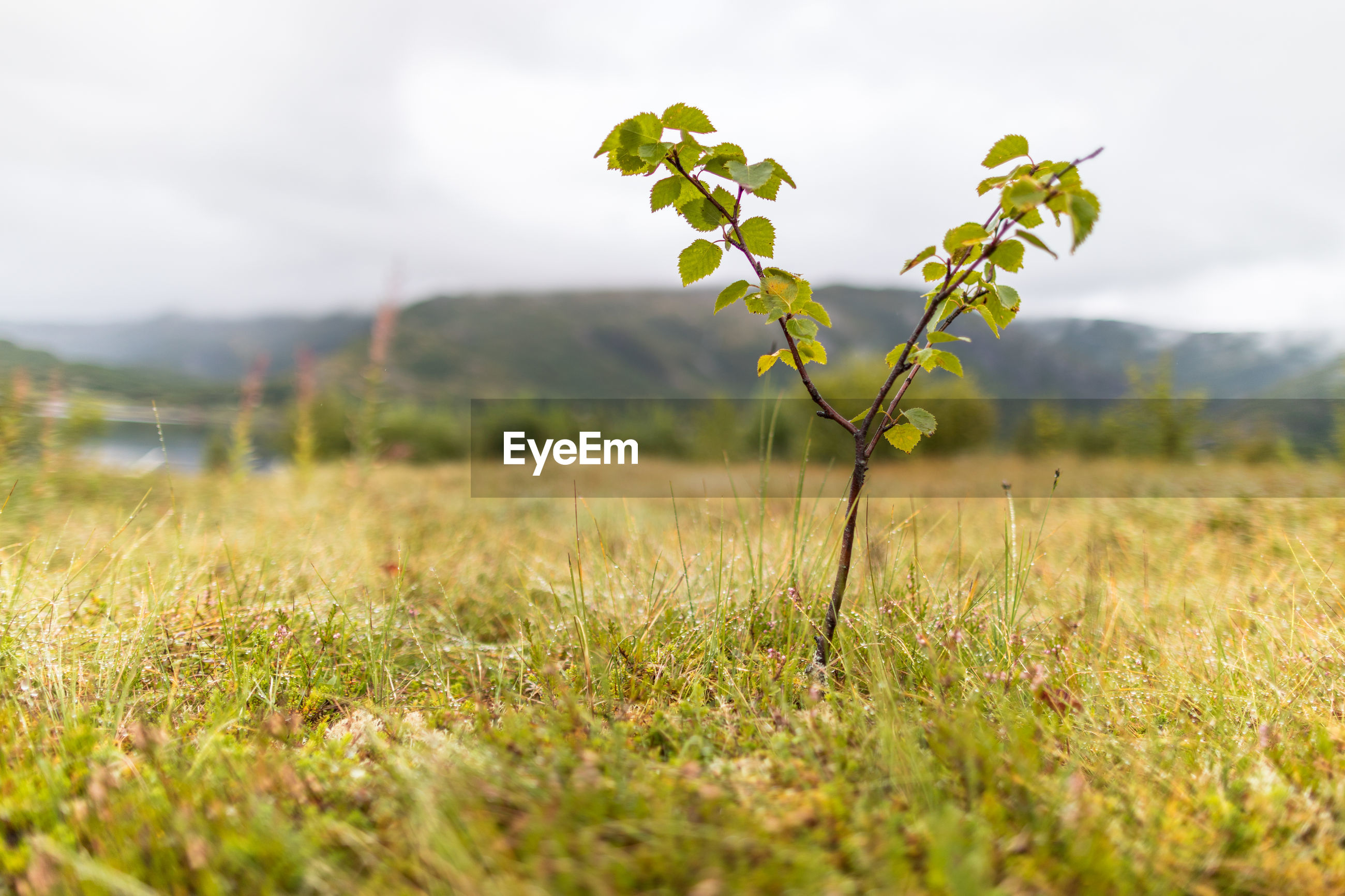 CLOSE-UP OF PLANT ON FIELD AGAINST SKY