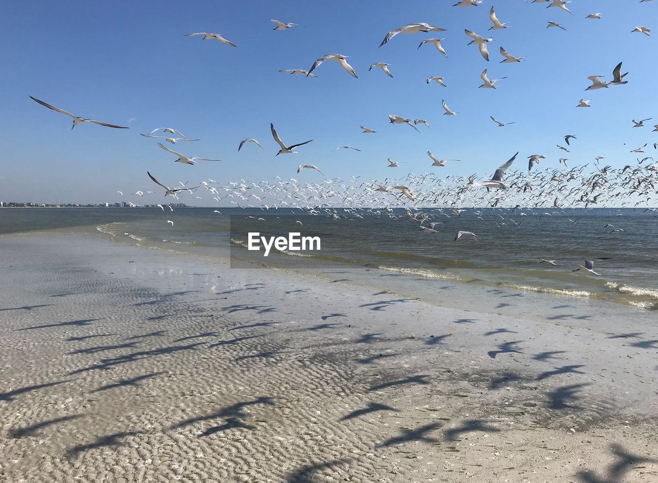 water, vertebrate, bird, large group of animals, animal themes, animal wildlife, animal, group of animals, flying, beach, animals in the wild, sky, sea, land, nature, beauty in nature, scenics - nature, sand, flock of birds, no people, seagull